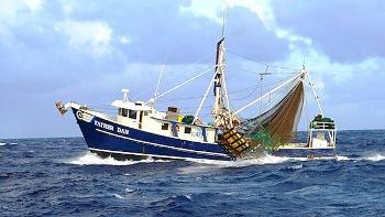Shrimp industry catches the wave - VBR