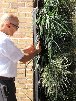 Ricardo Garcia of Rainhunters inspects one of his company's green walls, a fiberglass panel which holds a full array of plants and has its own micro-watering system.