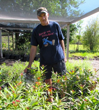 Mike Heep's nursery specializes in native plants, species like Mexican milkweed, red sage, heliotrope, and Texas mountain laurel that survive drought and flood, border heat and cold snaps.
