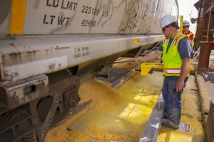 West Plains LLC employee unloading first unit train of grain (photo Port of Brownsville)