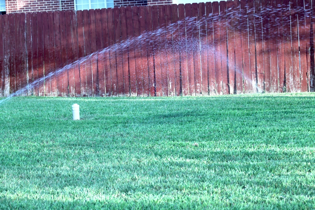 Setting up the sprinklers right in the yard makes sure there are no dry spots. (VBR)