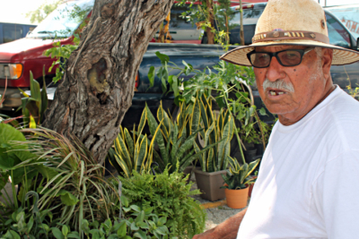 Lalo Del Los Reyes has been selling plants at the market since 1983. (VBR)