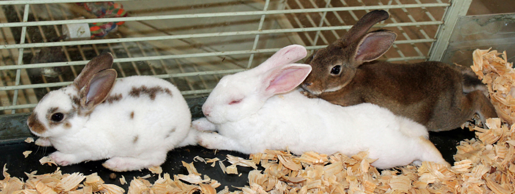 Rabbits are a popular pet choice. (VBR)