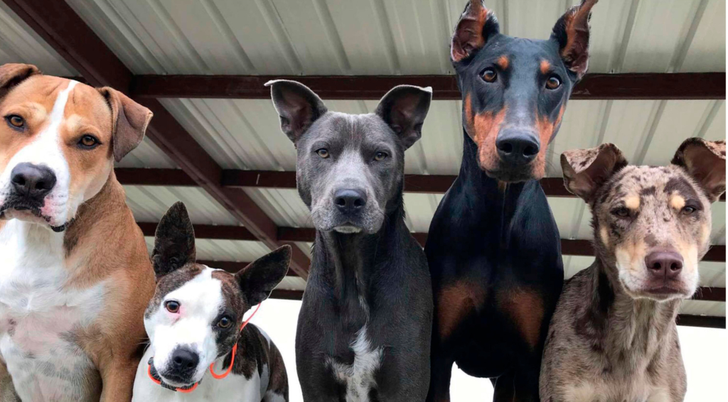The RGV K9 Training Centre daycare pack on a recent day. (Courtesy)