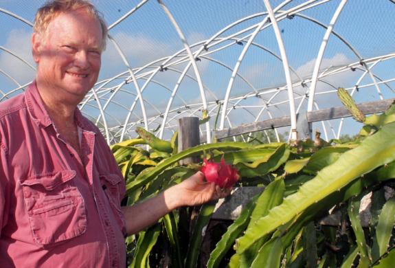Oklahoma native Chuck Taylor grows pitaya, or dragon fruit, commercially in Willacy County. (VBR)