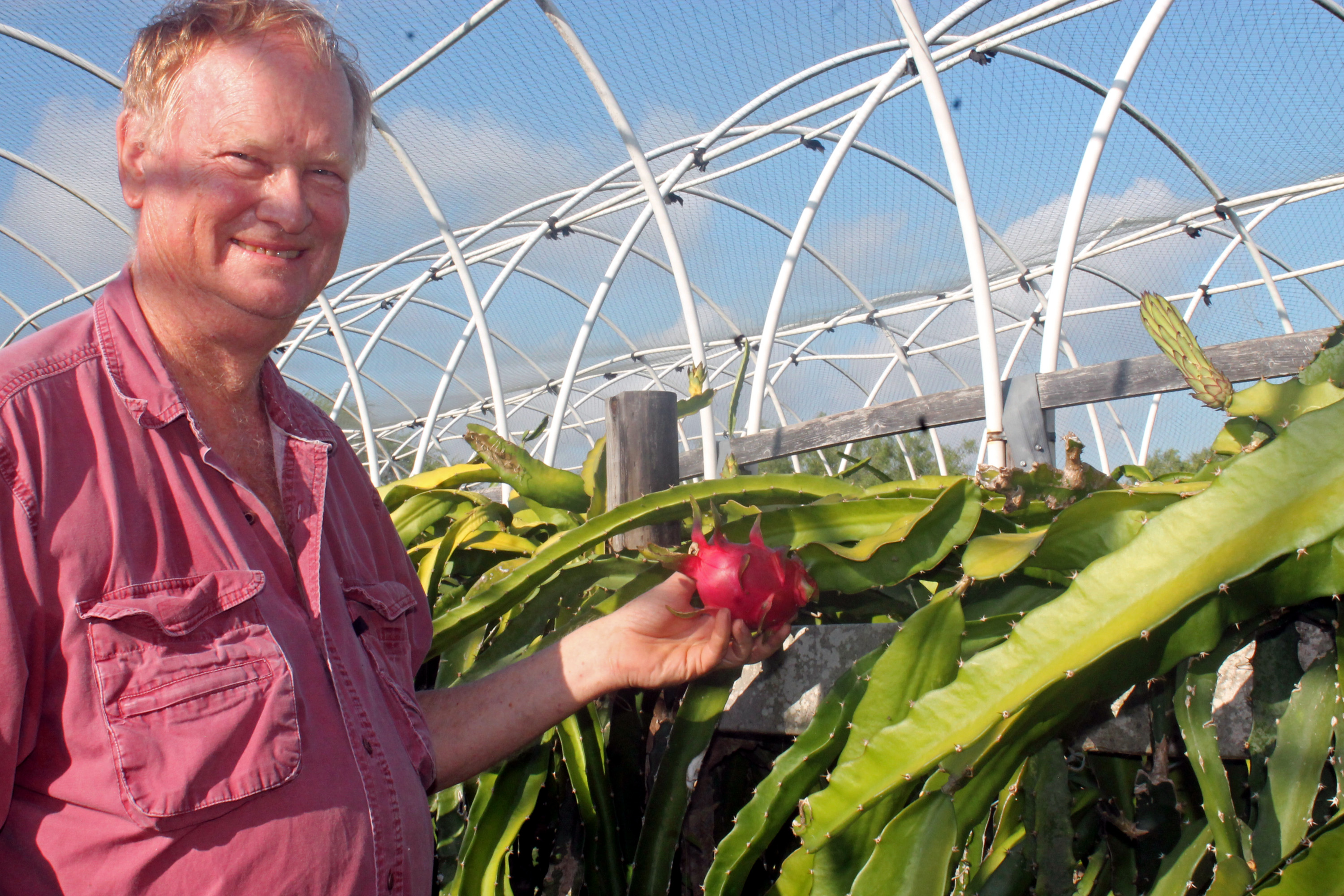 Oklahoma native Chuck Taylor grows pitaya, or dragon fruit, commercially in Willacy County. (VBR)