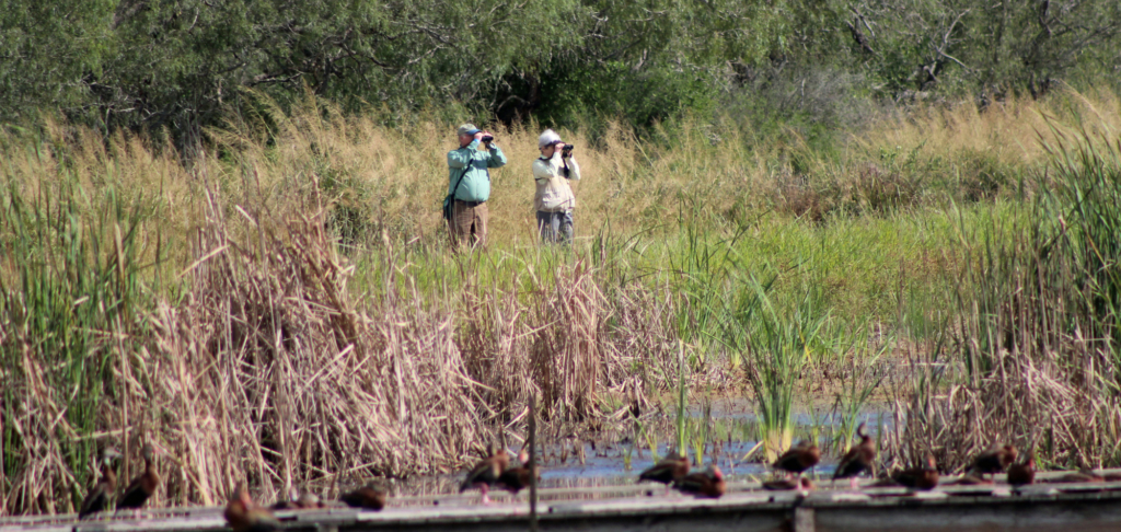 Two birders scan the area with binoculars at Estero Llano Grande State Park. (VBR)