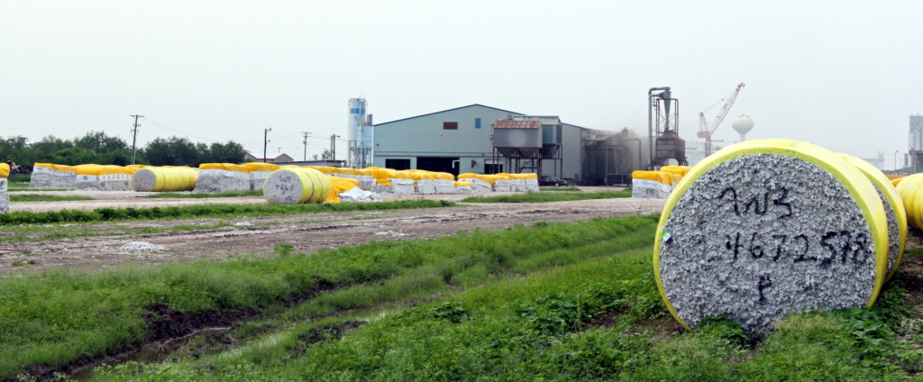Two cotton gins at the Port of Harlingen processed and shipped about 35 percent of the Valley's crop last year. (VBR)