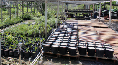 The pots with white starter cups hold native plant seedlings that will be used for habitat restoration by the U.S. Fish and Wildlife Service. (VBR)