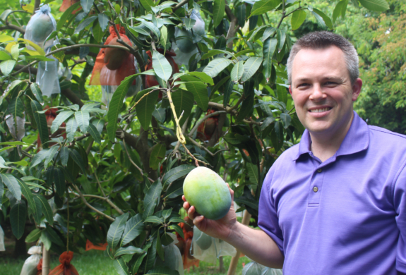 Jason Hess shows one of the many mangoes at the grove in Bayview.