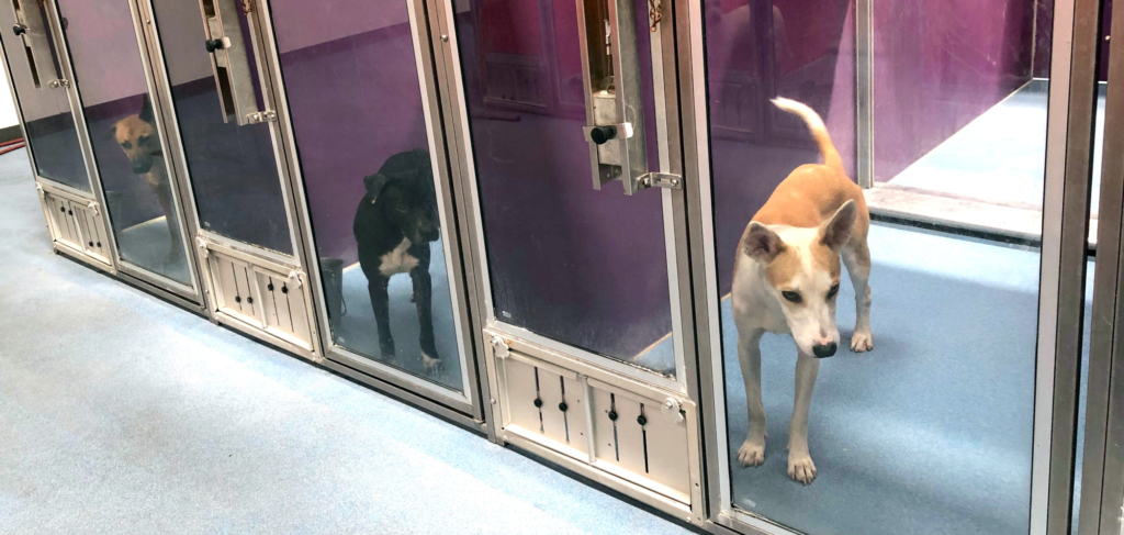 "Friendly pups wait anxiously for their forever family to adopt them during ""Clear the Shelter."""