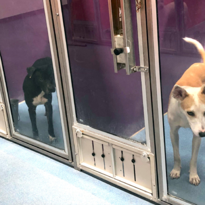 Friendly pups wait anxiously for their forever family to adopt them.