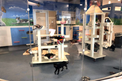 The cat room houses just some of the 60-plus cats that are currently in need of a home in the shelter.
