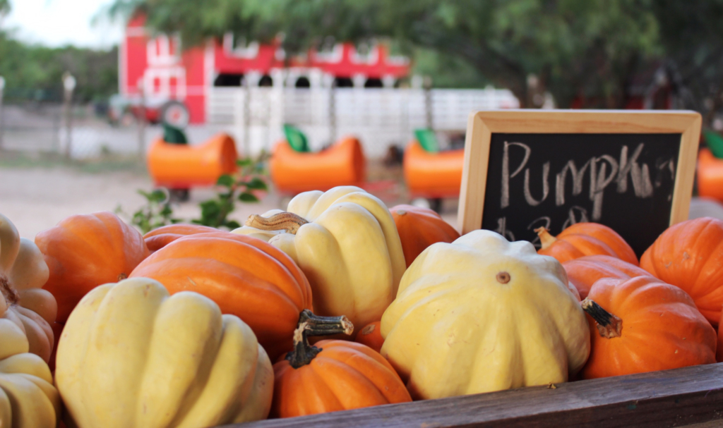 Opening Day of Maddie's Pumpkin Patch took place last month. It will be open to the public until Dec. 1. (VBR)