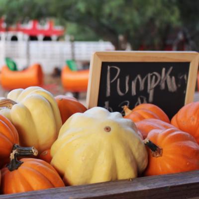 Maddie's Pumpkin Patch