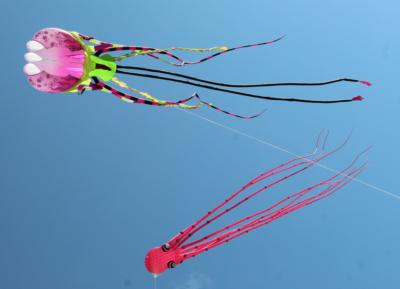 Kites below SPI skies.