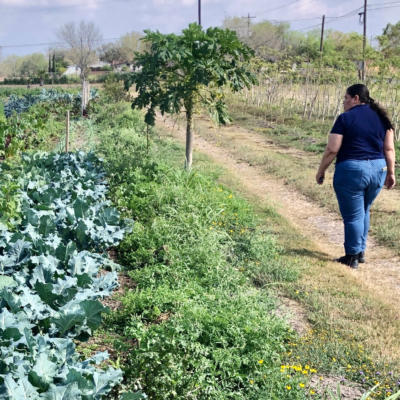 Diana Padilla looks over rows of organically grown crops at her farm in Harlingen.