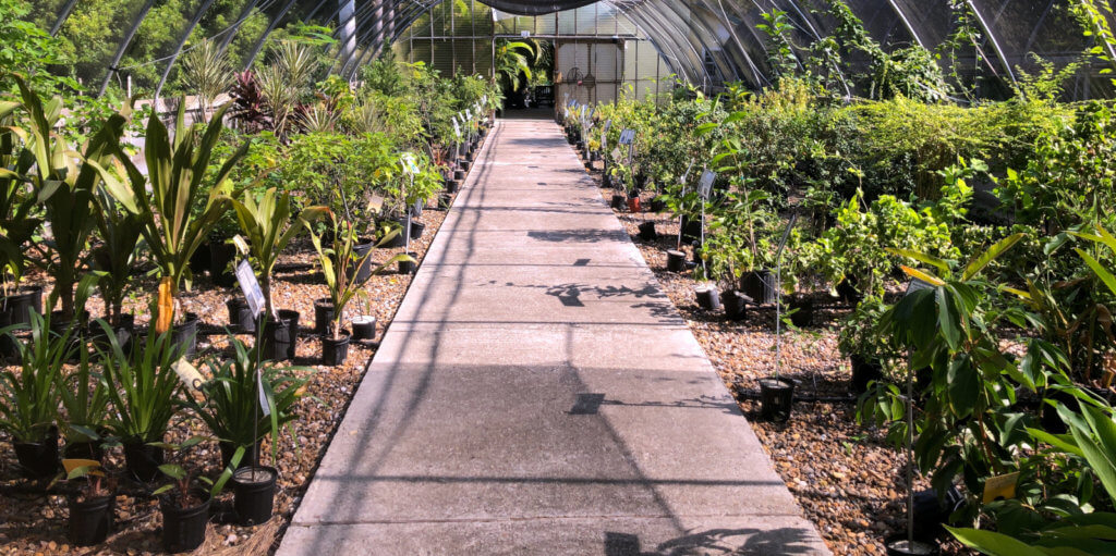 Greenhouses at Paradise Gardens offer hundreds of varieties of fruit trees.